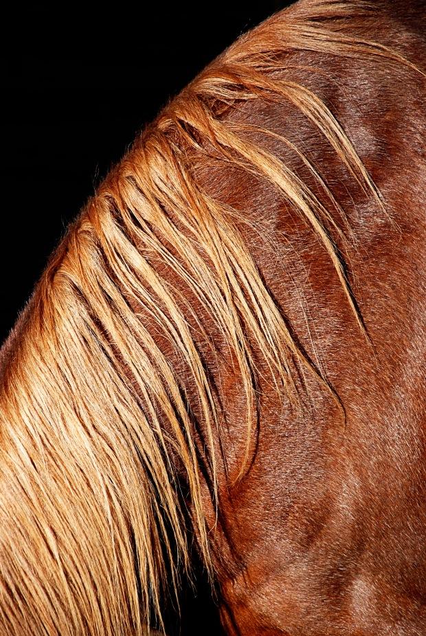 horsehair2 copy copy