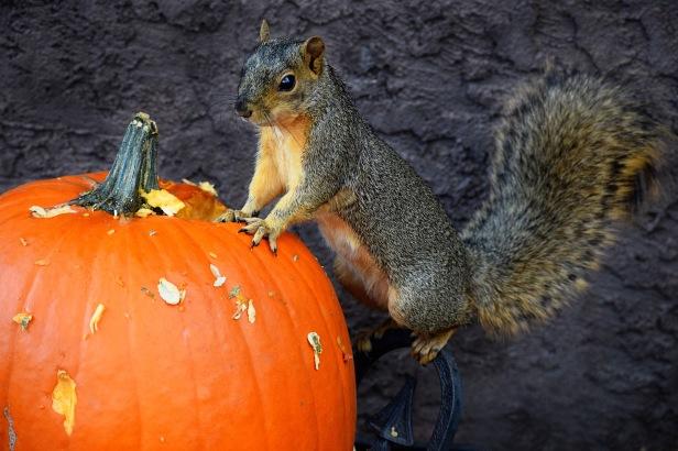 manitousquirrel