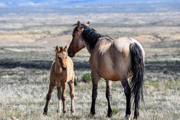 sandwashhorses1