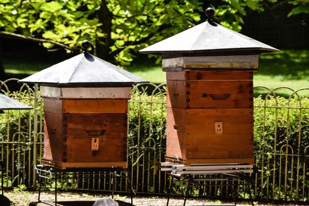 BeesJardinParis2